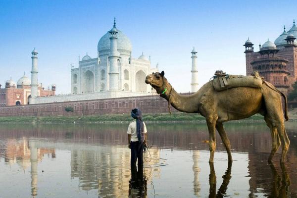 Прививки для путешествия в Индию. Вакцина