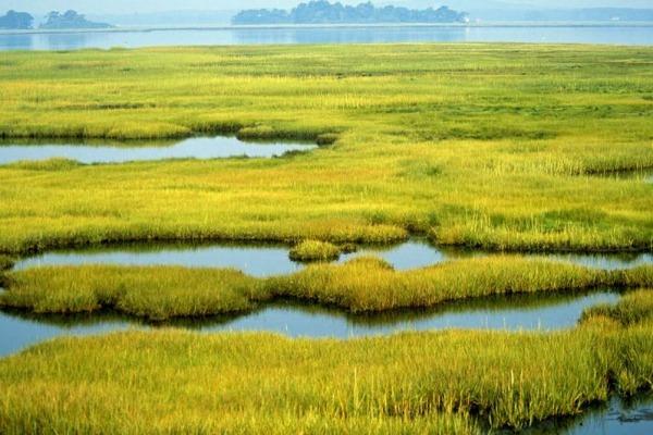 World Wetlands Day - Телемедтревел
